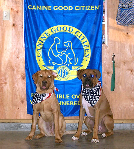 Canine Good Citizens - Oakley and Bodie